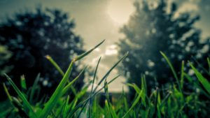 A photo of beautiful grass