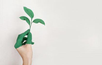 hand holding green leaf